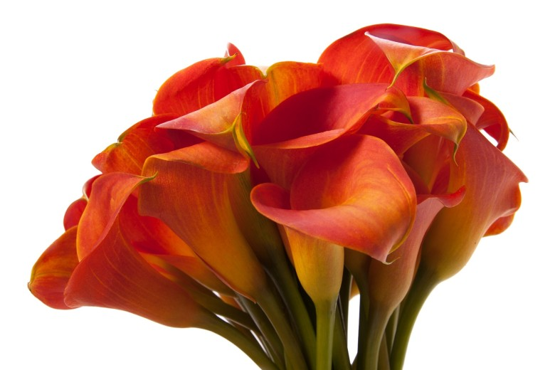 Orange Calla Lily Bouquet.
