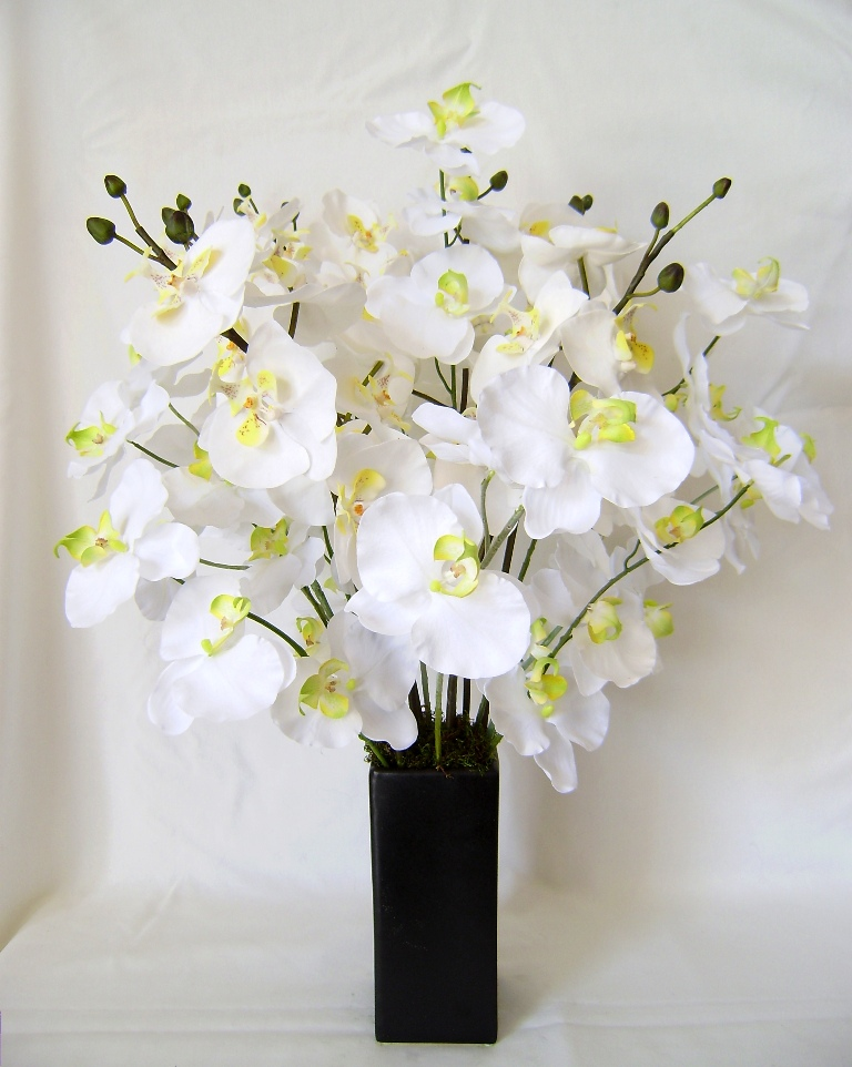 White orchids are fresh and a great gift.